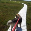 Direction Nord: L'anse aux Meadows