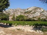 Les Alpilles derrière le vignoble