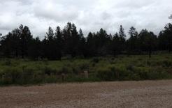 El Calderon Area, une forêt d'épinettes! J'ai d'ailleurs dormi au camping The Blue Spruce la nuit précédente!