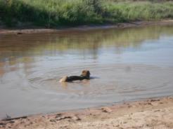 La seule à se baigner dans le Rio Grande.