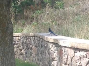C'est quoi cet oiseau magnifique?
