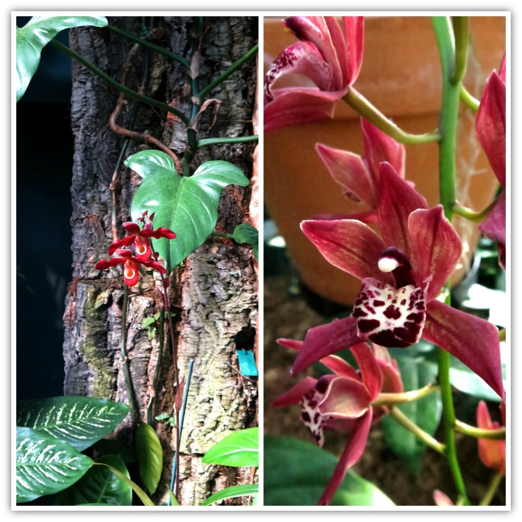 orchidc3a9es-2
