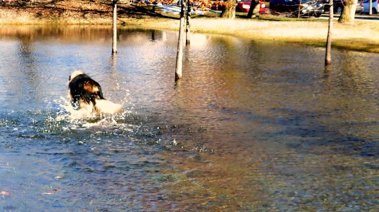 Le ciel s'y reflétant, Cléo confond: Puis-je nager? se demande-t-elle.
