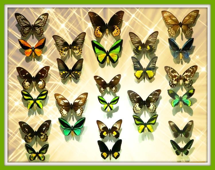 papillons protégés