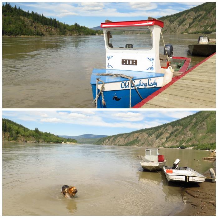 Le fleuve Yukon, Cléo s'y ébroue sous la Old Laughing Lady