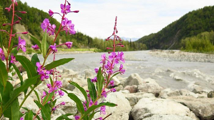 Matanuska rivière RC(13)