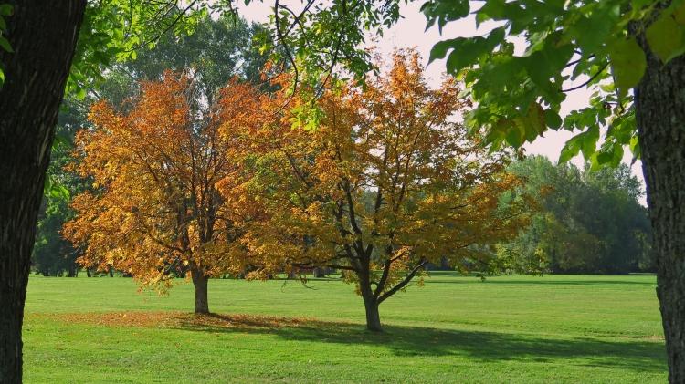 Parc Maison automne 14 (11)