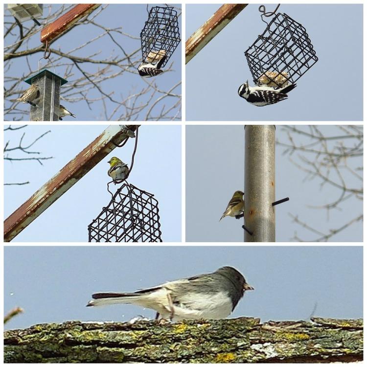 Oiseaux Collage