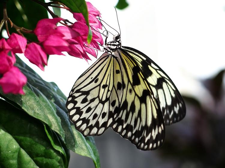 jardin botanique papillons 2015 1re partie mamie en