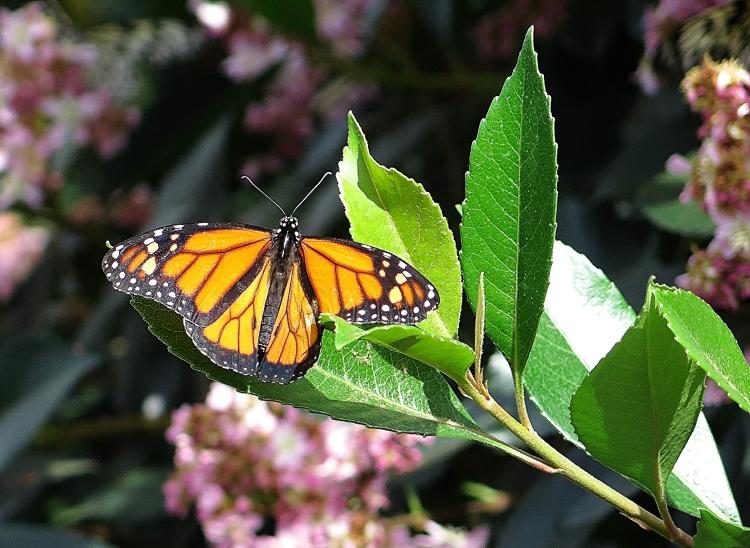 Jardin botanique papillons 2015 1re partie mamie en for Papillons jardin botanique 2016