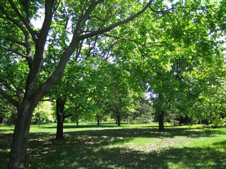 Jardin botanique (1)