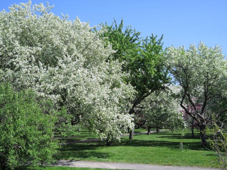 Jardin botanique (12)