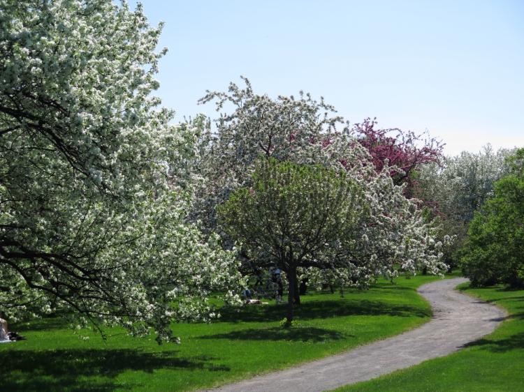 Jardin botanique (13)