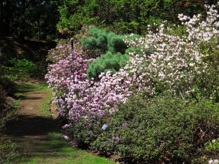 Jardin botanique (6)