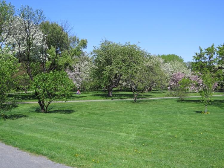 Jardin botanique (8)