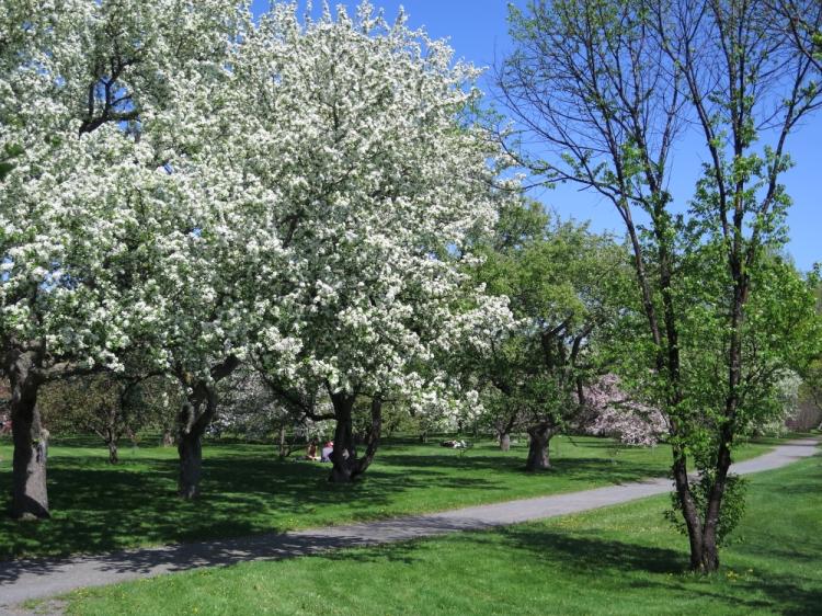 Jardin botanique (9)