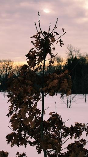 un peu de ces feuilles figées par le froid.