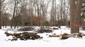Je suis aussi ces arbres malades que l'on jette à terre.
