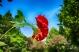 jardinroses06