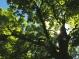 sous la protection d'arbres centenaires,