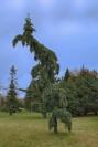 Quel arbre étrange!