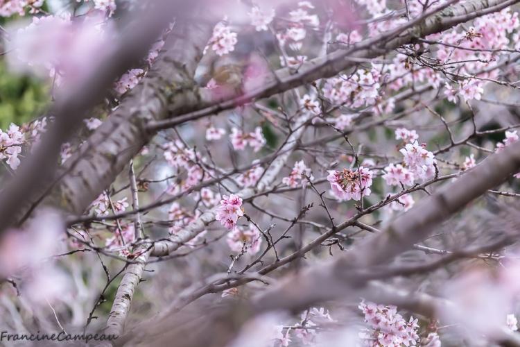 magnolias-9